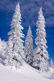 Snowy landscape on Jahorina mountain near Sarajevo, Bosnia and H