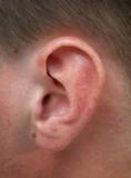 ear, hear poster
