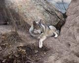 Fototapeta zwierzęta - ssak - Dziki Ssak