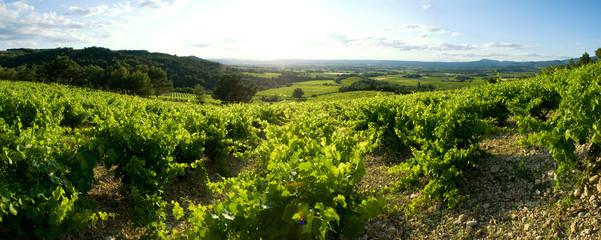 champ de vigne panoramique