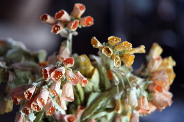 Closeup of dried flowers