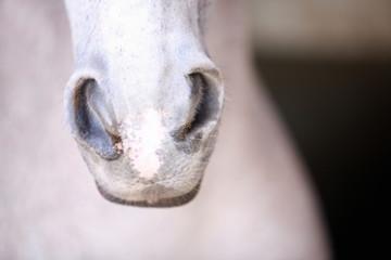 Horse's snout