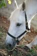 Closeup of horse eating