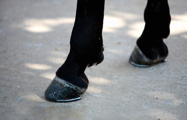 Closeup horse's hooves
