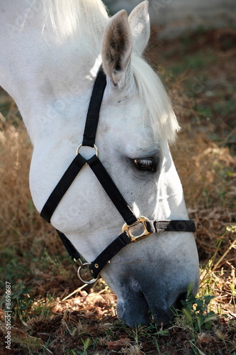 Closeup of horse eating