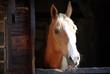 Closeup of horse