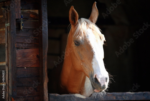 Closeup of horse
