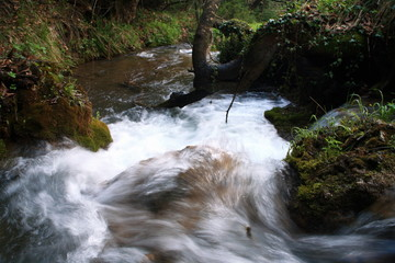 River rushing through forest