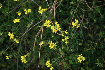 Closeup of flowers on a bush