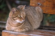 Tabby cat sitting on park bench