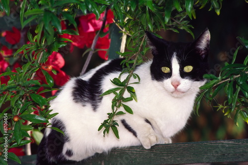 Black and white cat sitting on fence