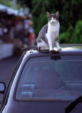 Cat sitting on car roof