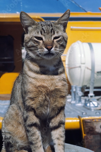 Tabby cat sitting at port