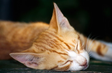 Closeup of cat sleeping