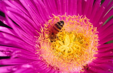 Pink flower with bee