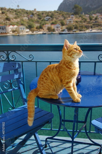 Cat sitting on cafe table
