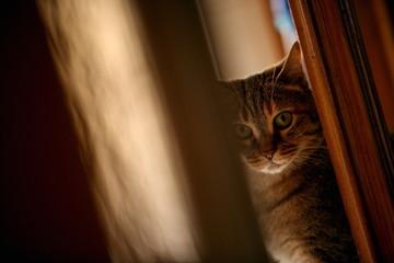 Closeup of cat peeking around door
