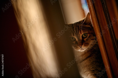 Closeup of cat peeking around door
