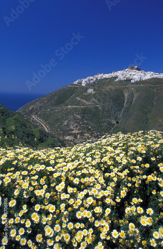 Mountain village with daisies in foreground
