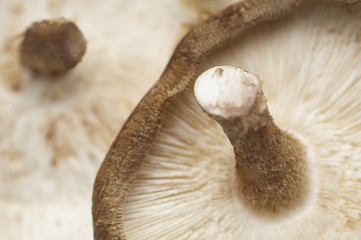 Mushroom, close-up