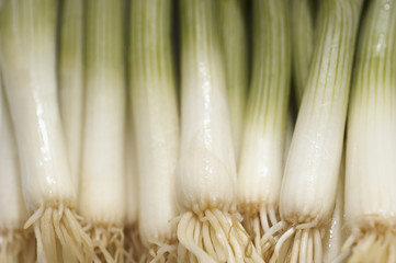 Leek, close-up