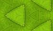 Underside Of Green Leaf Seamless Tile Background 8
