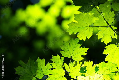 Canvas Textures green leaves