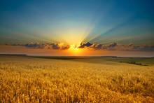 "Постер, картина, фотообои ""Golden field"""