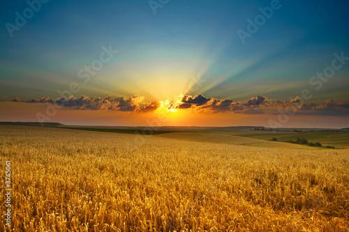 Leinwanddruck Bild Golden field