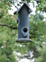 Vogelschutz