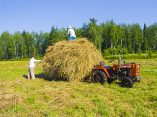 Haymaking in Siberia 13