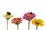 seasonal colorful flowers and bumblebees poster