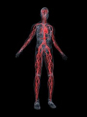 cardiovaskuläres system