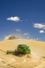 Two Combines Harvesting Wheat