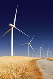 Power generating wind turbines, Rio Vista California poster