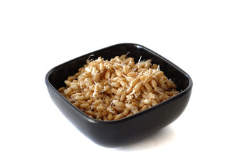 Bowl of Sprouted Wheat Berries