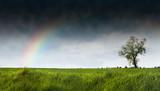 arbre orage ciel orageux tempête climat campagne arc ciel herbe poster