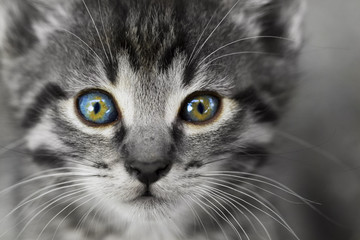 Partial coloring photo of small kitten - close-up