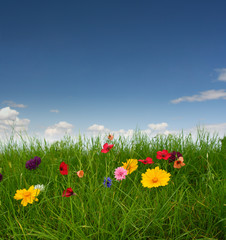 Beautiful meadow with flowers