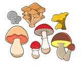 Various fungi collection poster