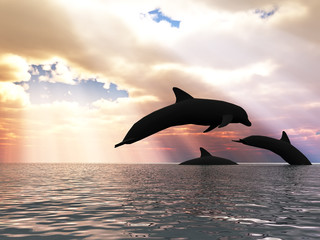 Three dolphins floating at ocean (control light)