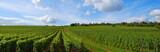 Panorama de vignes - 8860813