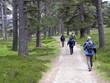 Waldweg in den schottischen Highlands