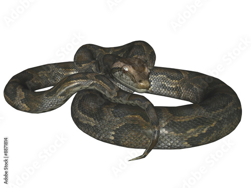 The python. The Reptile, snake. Isolated, the illustration 3D