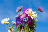 bunch of wildflowers on blue sky background poster