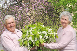 happy grandparents in flowering garden with posy poster