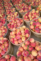 Bushels of Fresh Peaches