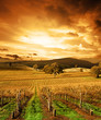 Autumn Sunset over vineyard