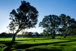 Gorgeous Rural Landscape in the Adelaide Hills