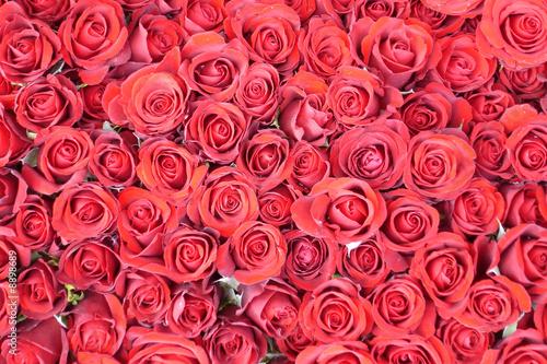 rote rosen von schneewittchen lizenzfreies foto 8898689. Black Bedroom Furniture Sets. Home Design Ideas